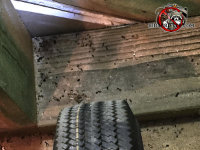 Mouse droppings in the loft of a garage in Cornelia Georgia. There is also the tire of what appears to be a wheelbarrow.