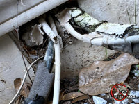 Gap in the foundation where pipes and wires pass through allowed mice into the crawl space of a house in Harrison Tennessee