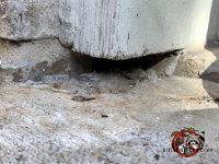 Small gap between the wooden door frame and the concrete allowed mice into a house in Roswell Georgia