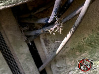 Cable TV wires were passed through the slightly open foundation vent of a house in Snellville Georgia and mice got in through the opening