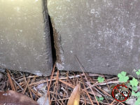 Gnaw marks along the edge of a crawl space door where mice got into the crawl space of a house in Tifton Georgia