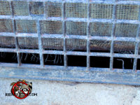 Mice got into a house in East Ridge Tennessee through a rotted screen behind a foundation vent