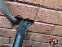 Gap around pipes and conduit passing through a fist sized hole in a brick wall needs to be sealed to keep mice out of an Albany Georgia home.
