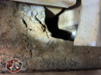Gap in the concrete where a timber passes through in the crawl space under a house in Jackson Georgia allowed mice to move freely throughout the crawl space
