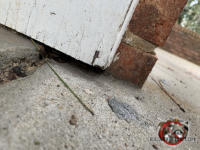 Quarter inch gap between the wooden door trim and the concrete pavement allowed mice to get into an east Brainerd Tennessee home