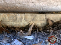 Three eights of an inch gap at the top of the brick foundation by the sill plate allowed mice into a Signal Mountain Tennessee home