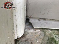 Mice chewed through the end of the weather seal of the garage door to get into the garage of a house in Chatanooga