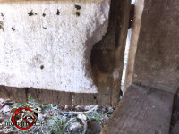 Mice gnawed through an insulated wooden crawl space door to get into the house