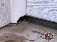 Mouse gnawed a quarter sized hole through the garage door trim to get into the garage of a house in Ellijay Georgia