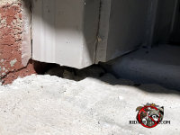 Gap under the garage trim allowed mice into a house in Gainesville Georgia