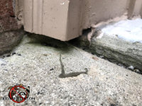 Gap between the exterior door trim and the cement allowed mice into the house