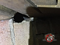 Mouse hole where the bricks meet the bottom of a bay window