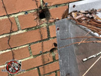 Two quarter sized holes in a brick wall where pipes used to pass through need to be sealed to exclude mice from an Albany Georgia home.