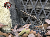 Cable installer poked a hole through the foundation vent to run the cable, which allowed mice to get into a house in Valdosta Alabama.