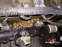 Mouse nest and acorn shells on the valve cover of a pickup truck