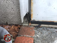 Water rot at the bottom of the wooden door frame created a gap through which mice were able to get into a house in Jasper Tennessee