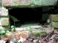 Hole in a brick foundation allowed bears to get into a house in Georgia