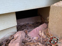 Large rectangular gap in the foundation of a house in Macon Georgia needs to be screened to keep opossums out of the crawl space.