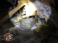 The insulation was torn from the walls and strewn about by an opossum in the attic of a house in Chattanooga