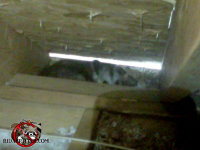 Opossum hiding in the eave of the attic of a house in East Brainerd Tennessee