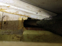 Raccoon hole under the roof sheathing at a house in Fairfield, Alabama