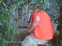 Animal control expert making a crawl space in Irondale AL raccoon-proof