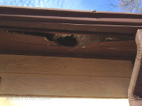 Big raccoon hole in a roof soffit of a house in Midfield, Alabama