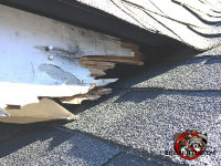 Raccoon damage to the wooden roof trim at a roof junction point on a house in East Ridge Tennessee