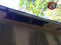 Raccoons tore off a portion of the soffit about three feet by ten inches at a house in Macon Georgia