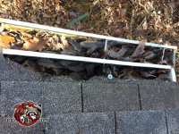 Raccoons tore the shingles off the edge of the roof of a house in Birmingham Alabama to get into the roof