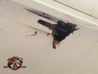 Raccoon tore a hole through the plywood soffit panel of a house in Collegedale Tennessee
