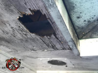 Raccoons tore a four by six inch hole in the weathered plywood soffit panel of a house in Valdosta Georgia