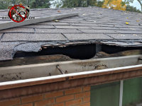 A raccoon started with an existing squirrel hole and enlarged it by tearing at the roof shingles and sheathing