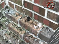 Bits of raccoon poop on the outside of the brick chimney of a house in Chattanooga Tennessee