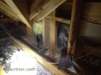 Raccoons pulled the insulation down and pooped all over in a Trussville AL attic