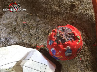 A ball chewed up by rats in the crawl space of a house in Villa Rica, Georgia