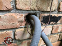 Rats got into a brick house in Chattanooga through the gap around several electrical conduits where they passed through the wall