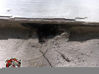 Rat hole under the siding at the top of the foundation of a house in Sylvester Georgia