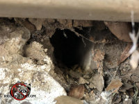 Rat burrow outside and leading into a house in Macon Georgia