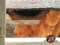 Rats chewed through the foam insulation the homeowner used to seal them out of the attic of a house in east Ridge Tennessee