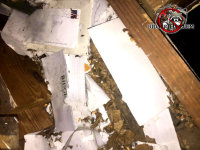 Rats gnawed up papers stored in an attic in Birmingham