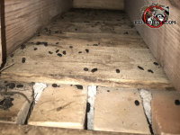 Rat droppings in the crawl space of a house in Albany Georgia