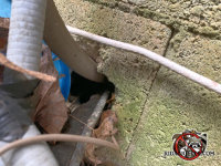 Rats got through a cinder block wall in Chattanooga through the hole where pipes and wires passed through the wall