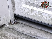 rats got into a Harrison Tennessee garage because the door didn't close tightly against the pavement