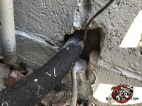 Gap around the air conditioning line where it passes through the wall allowed rats to get into a house in Perry Georgia