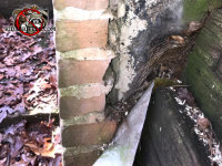 Hole near the chimney of a house in Macon Georgia where the facade has come off the wall allowed rats into the house