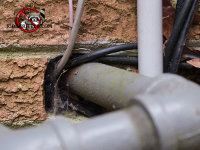 Rats got into a Middle Valley Tennessee home through a gap around a pipe where it passed through a brick wall