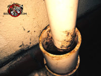 Rat rub marks on sewer pipes where rats got into a basement in Macon through the plumbing