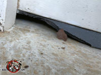 Rats chewed away about eight inches of the weather seal on the bottom of the garage door to get into a house in Columbus Georgia.