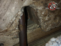 Norway rat hole with a pipe going through it in the basement of a house in Chattanooga Tennessee